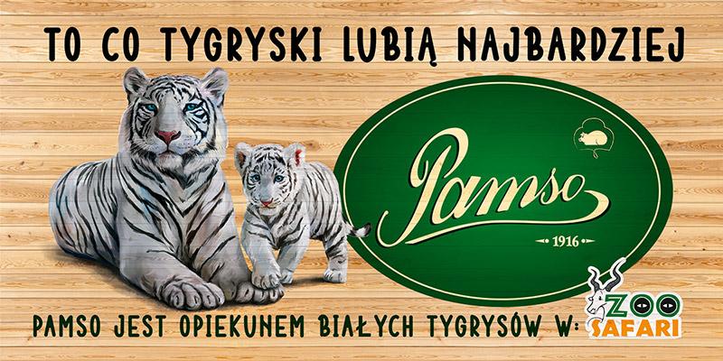 Pamso opiekun trygrysów białych - Zoo Safari Borysew